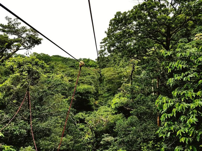 EyeEmNewHere Tourism Costa Rica Buena Vista Tree Growth Green Color Nature Outdoors Low Angle View Day Sky beauty in nature Branch No People Freshness Ziplining In The Forest