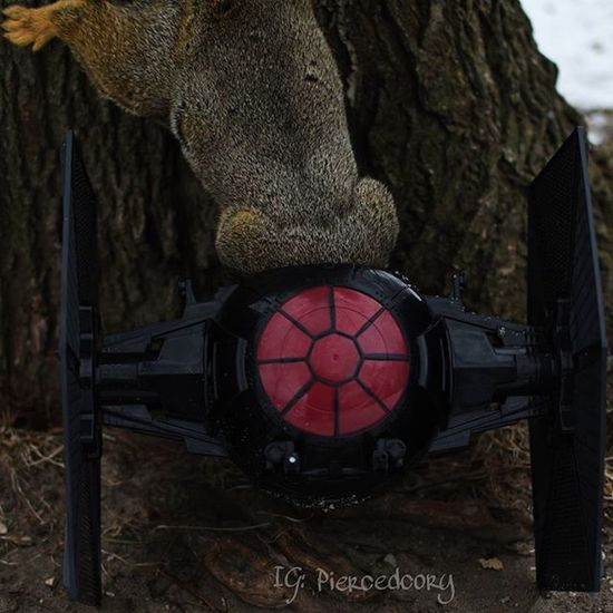 Can you pass me the socket wrench?.... Funwiththesquirrels Luckywiththeanimals Squirrel Tiefighter Mechanic