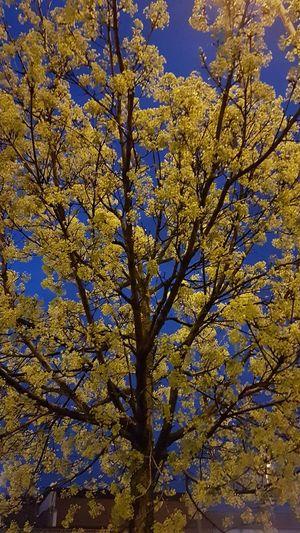 La primavera illumina la notte Beauty In Nature Nature Primavera Luce Natura Cittadina No Filter Nature Beauty In Nature