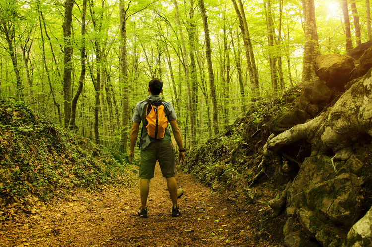Adventure Discobering Excursion Exploring Fageda D'en Jorda Forest Forest Path Forestwalk Green Green Background Green Leaves Green Trees Hiking Idyllic Lush Foliage Non Urban Scene Non-urban Scene One Person Outdoors Plant Tranquility Walker Walking Into The Wild WoodLand