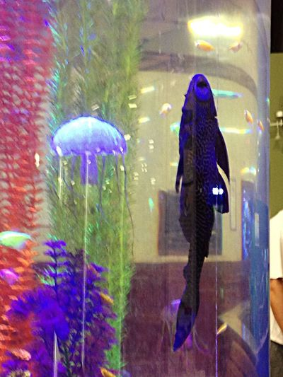 Visited the pet shop today, met this two feet long pleco. Intresting. Fish Pleco That Fish Place the place was called ThatFishPlace