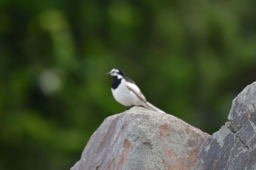 Animal Themes Bird Animal Animal Wildlife Vertebrate Animals In The Wild One Animal