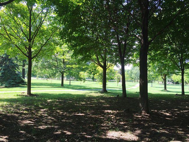 Park Summer Trees Landscape
