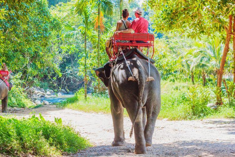 wonderful trip with elephant riding Trip Travel Travelling Journey Traveller Tourism Hot Exoticism Beauty Wildlife Fun Colourful colour of life Nature Tree Elephant Men Indian Elephant Animal Trunk Elephant Calf