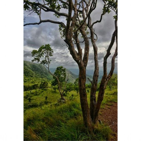 Relaxing in the middle of amazing mountain journey Greenry Greenfields Trees Mountains MountainTenderalla Holidays AmazingPlace Walk JourneyThroughWonders CoronIsland Palawan Province Philippines ItsMoreFunInThePhilippines summerchill Holidays
