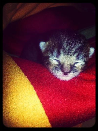 My Little Cat☺ Sweet Dreams Cutie♥ First Eyeem Photo