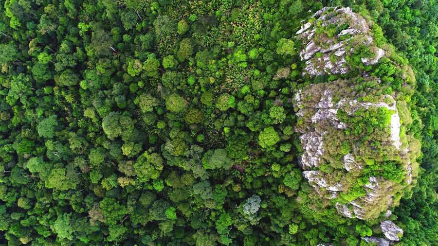 Beautiful green and yellow color of rain forest. Backgrounds Beauty In Nature Close-up Day Forest, Aerial, Green, Nature, Landscape, Tree, View, Above, High, Summer, Day, Outdoor, Season, Woods, Park, Natural, Environment, Travel, Foliage, Horizon, Valley, Trees, Drone, Texture, Rural, Fresh, Wild, Wilderness, Plant, Serene, Water, Area, Large, Fragility Freshness Green Color Growth Ivy Leaf Nature No People Outdoors Plant Tree