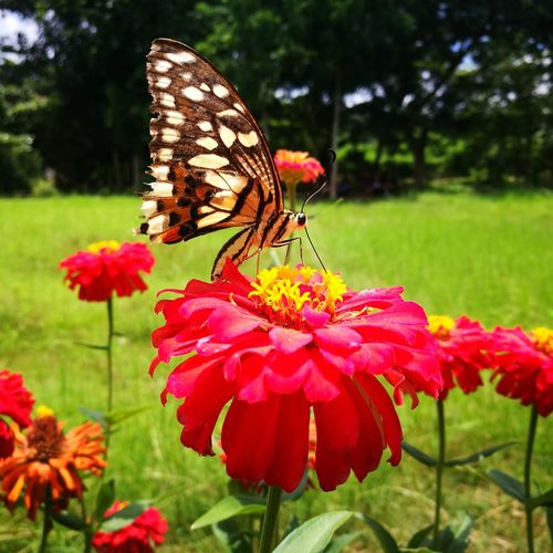 Insect Butterfly - Insect Flower Animals In The Wild Growth Nature Animal Themes Fragility Focus On Foreground Freshness No People Beauty In Nature Plant One Animal Outdoors Animal Wildlife Butterfly Day Perching Flower Head