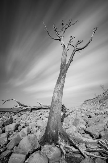 Sony A7RII Arid Climate Bare Tree Beauty In Nature Camshy Cloud - Sky Day Dead Plant Driftwood Landscape_photography Lee Filters Nature No People Non-urban Scene Outdoors Plant Rock Sky Solid Sonyphotogallery Tranquil Scene Tranquility Tree
