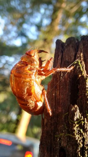 Close-up of crab on tree against sky