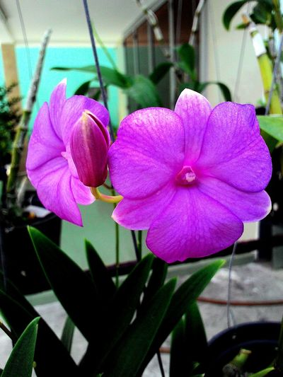 Orchids Orchids Orchids Garden Orchids! Violet Orchids I Love Orchids Beautiful Pink Orchids Ground Orchids