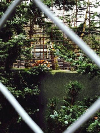Tree Built Structure Architecture No People Nature Day Growth Plant Outdoors Building Exterior Tiger Tiger-love Tiger Love Caged