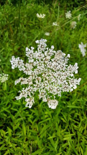Flower Plant Nature Close-up No People Outdoors Beauty In Nature Grass Plant Part Day Fragility Flower Head Freshness