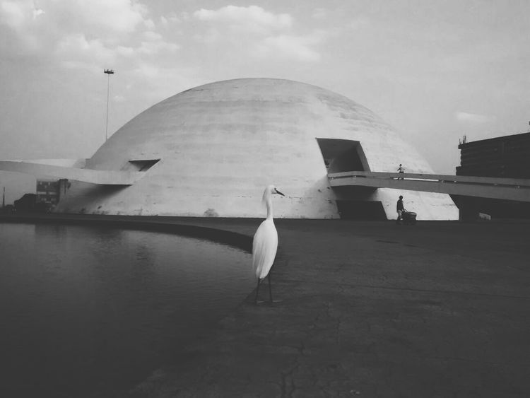 Bird Bird Photography Arch Reflection Architecture Sky Day Oscar Niemeyer Brasília - Brazil Details Fragility Detailsseries No People Low Angle View Angles And Lines Urban Skyline Brasilian City City Angles And Views Architecture Brasilia Brasil DF Brasiliangallery Bw_collection Black And White Black And White Photography
