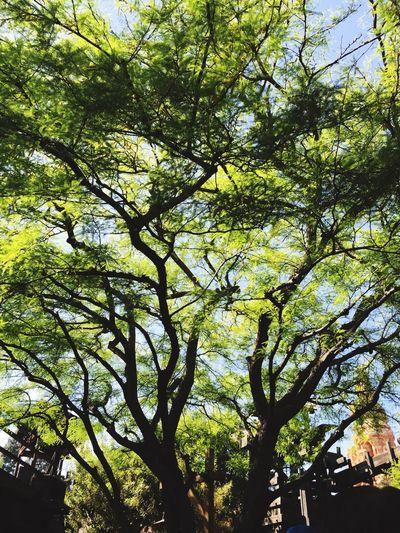 🌲🌲🌲🌲 Trees Bigthundermountain