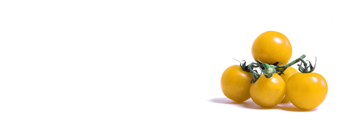 Close-up of yellow Tomatoes isolated on white Background. Cocktail Tomatoes Tomatoes Tomato Yellow Tomatoes Yellow Fruit Fruits Stalk Green Food Studio Shot Freshness Indoors  No People Vegetable Cut Out Ripe Close-up White Background Raw Healthy Eating Food And Drink Wellbeing Isolated Small Group Of Objects Group Of Objects Raw Food Copy Space Still Life Organic Small