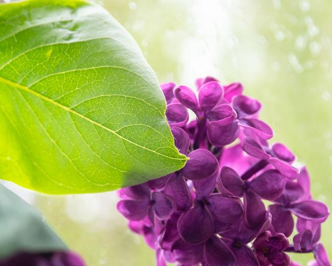 Freshness Plant
