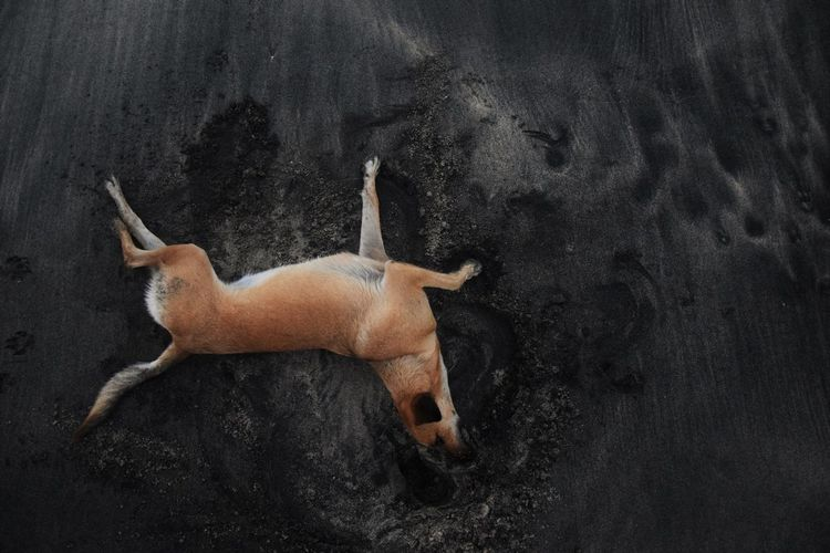 Directly Above Shot Of Dog Lying At Beach