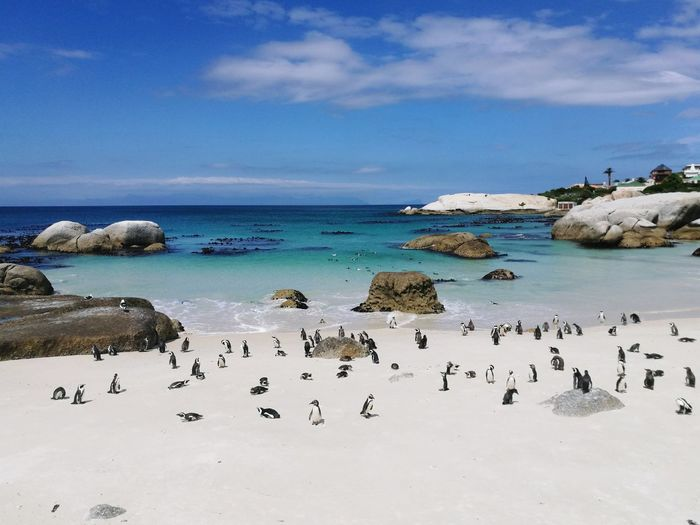 High Angle View Of Penguin At Beach Against Sky
