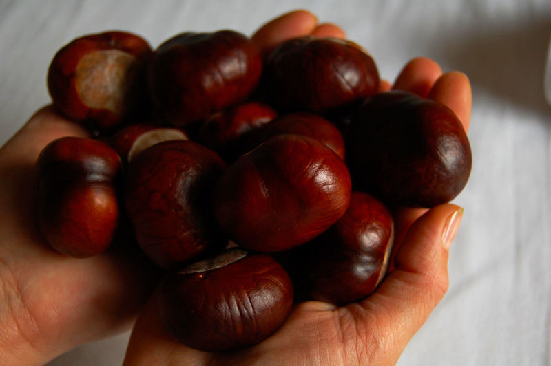 Cropped image of hand holding chestnuts