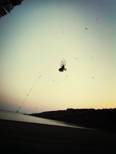 Omg Scary Moment... I Hate Spiders Check This Out