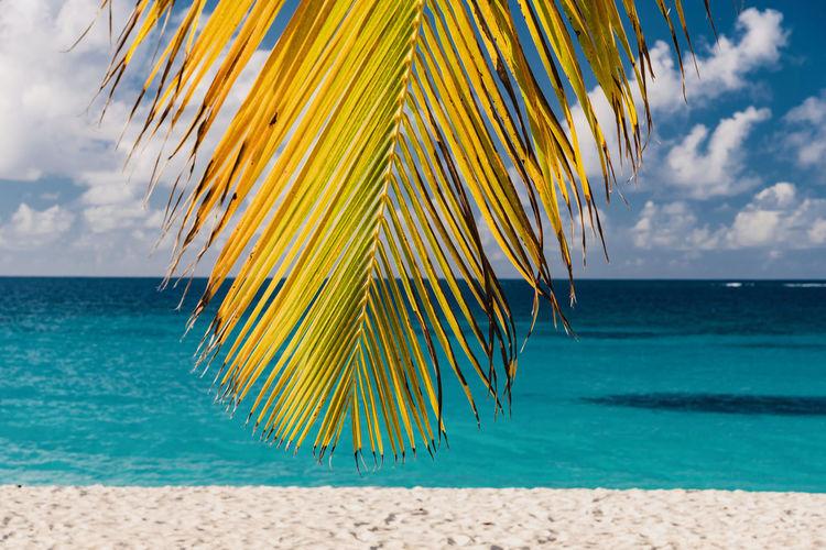 Close-up of palm tree on beach