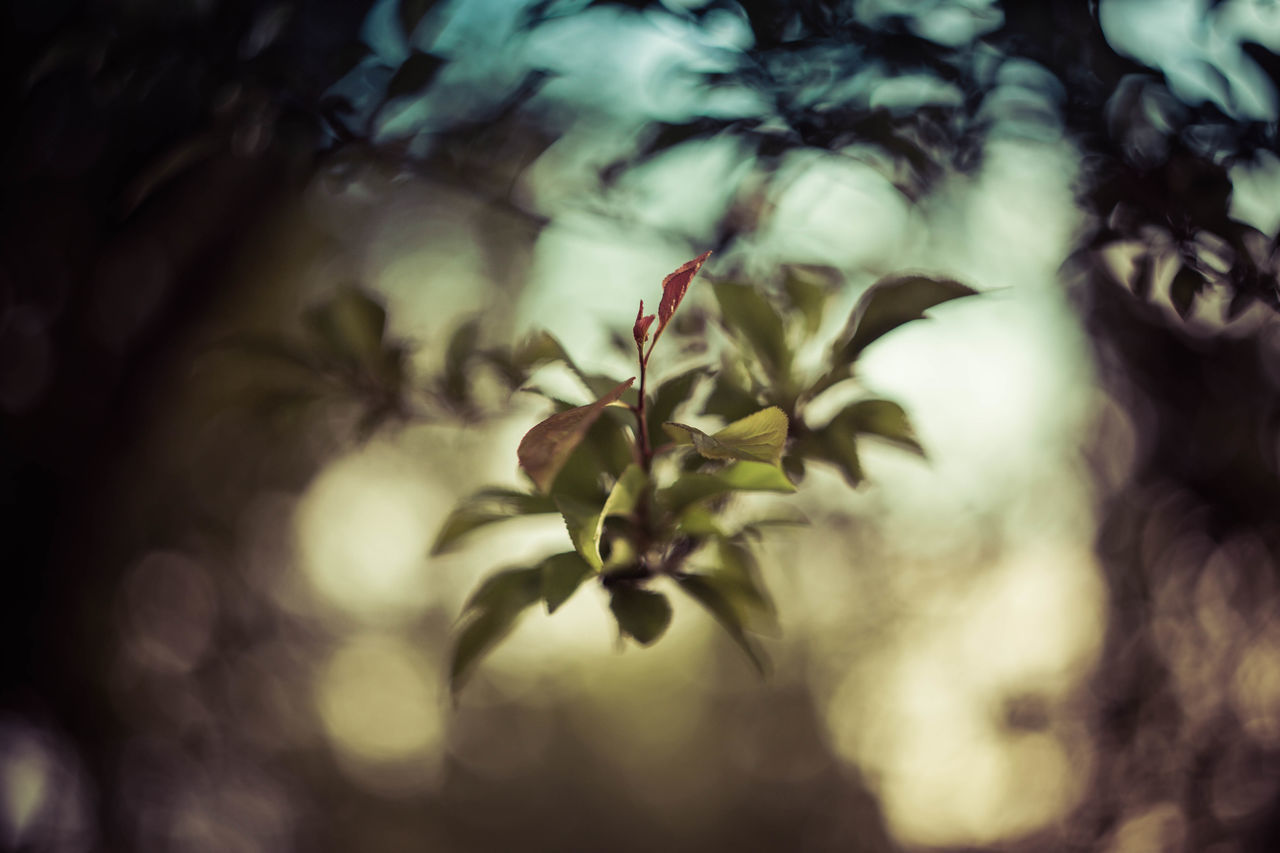 growth, nature, bright, delicate, environment, plant, tissue, beauty, flower, no people, foliage, beauty in nature, close-up, outdoors