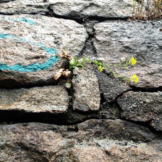 I See Faces Stone Pareidolia
