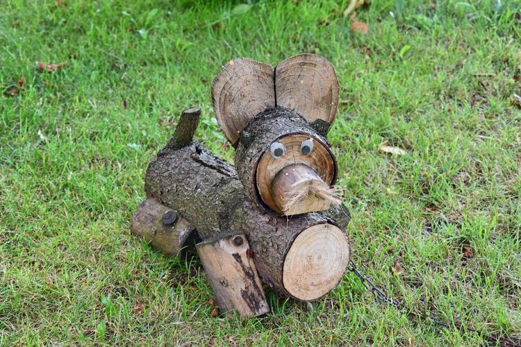 Close up of firewood with googly eyes on grassy field