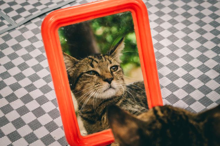 Close-up portrait of a cat in basket