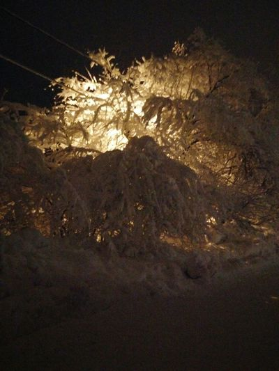 Snow Ice Trees Ice Trees Winter Chamonix Mont Blanc Grands Montets Winter Has Come Cold Weather Fun Friends Ice Trees One Plus One Night Shot Night No People Illuminated Outdoors Nature Close-up Shades Of Winter