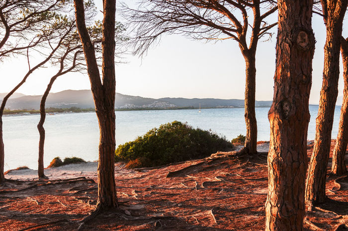 trees by sea against sky budoni sardinia Perspectives On Nature Sardinia Sardegna Italy  Bare Tree Beauty In Nature Branch Budoni Budonibeach Day Dead Tree Evening Atmosphere Lake Mountain Nature No People Outdoors Pinewood Scenics Sky Sunset Tranquil Scene Tranquility Tree Tree Trunk Water