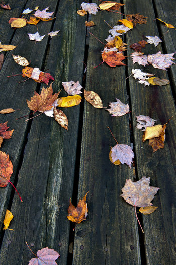 Autumn Wood - Material Leaf Plant Part Day Leaves Change No People Nature High Angle View Close-up Outdoors Dry Falling Beauty In Nature Plant Vulnerability  Fragility Flower Yellow Maple Leaf