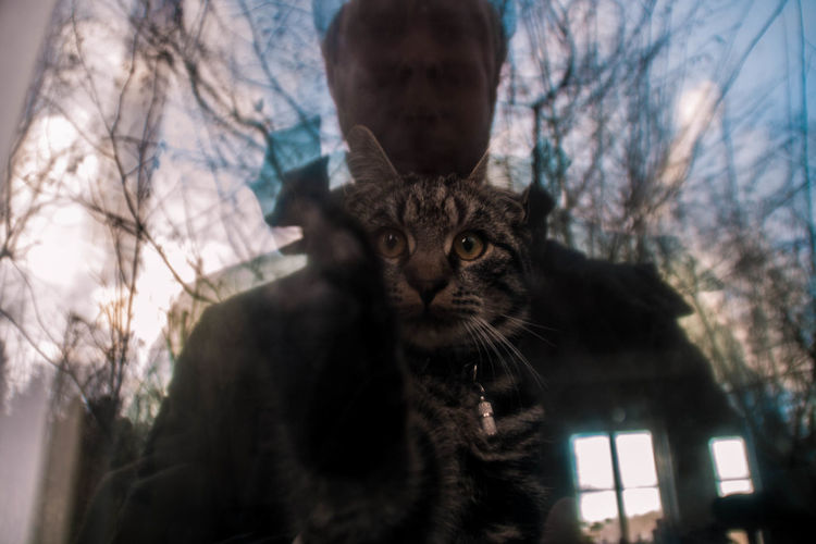 Close-Up Of Cat On Window Seen From Glass Window With Reflection