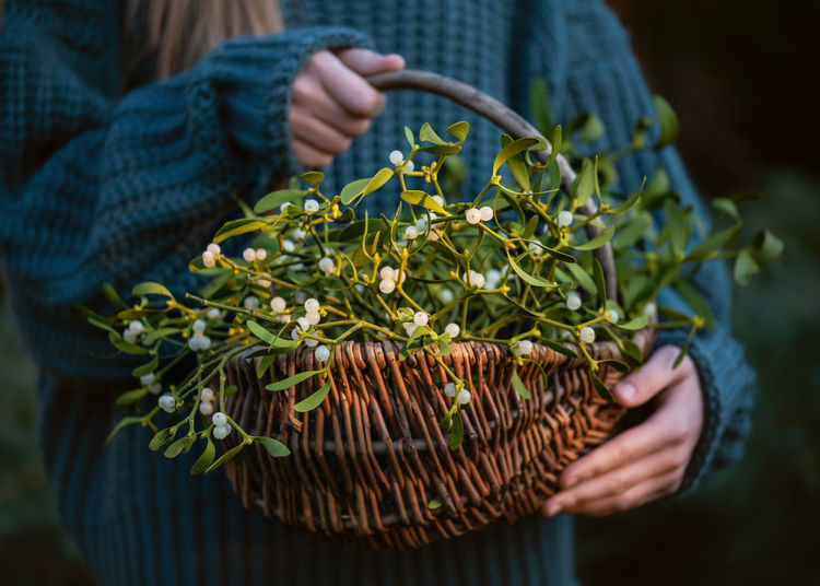 Young girl holding a wicker basket with mistletoe branches with green leaves and white berries.