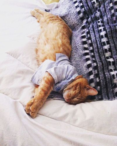 Pets Domestic Animals One Animal Mammal Domestic Cat Animal Themes Sleeping Resting Relaxation Feline Carnivora No People Lying Down Indoors  High Angle View Bed Cat Full Length Pet Bed Day Pet Portraits Be. Ready.