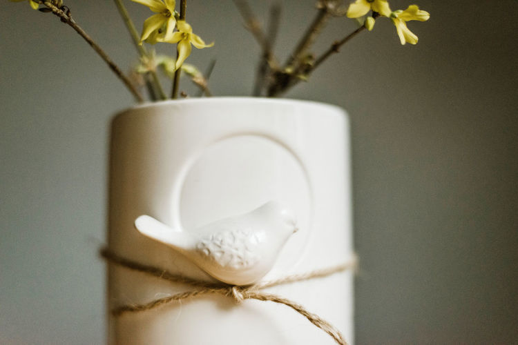 Close-up of white flower in vase