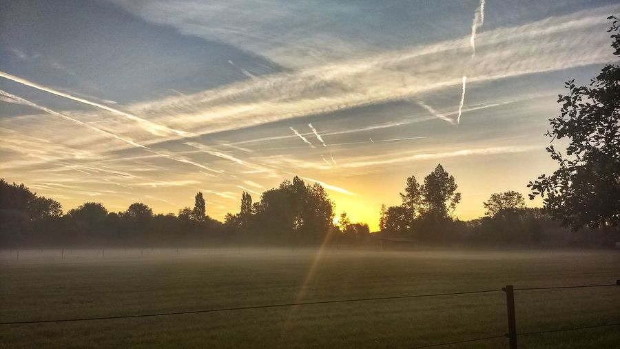Tree Rural Scene Fog Field Agriculture Sky Landscape Atmospheric Mood Barbed Wire Cumulus Romantic Sky Sunrise - Dawn Atmosphere