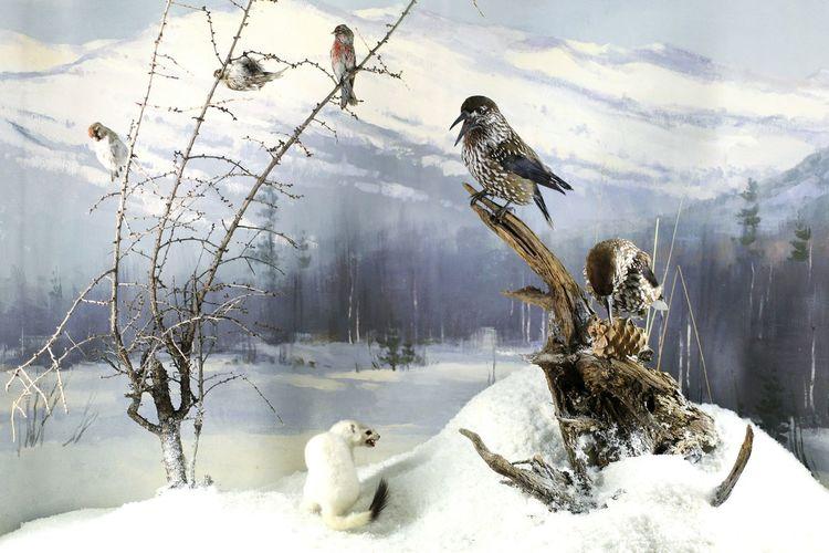 Outdoors Nature Bird Animal Themes Winter