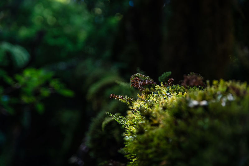 Close-up of moss and lichen growing in forest
