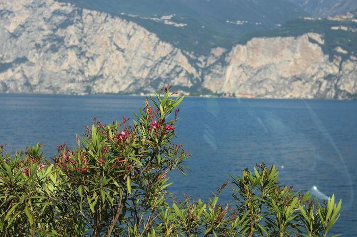 Gardasee Gardasee,Italien Sträucher Garda Lake Lake View Strauch