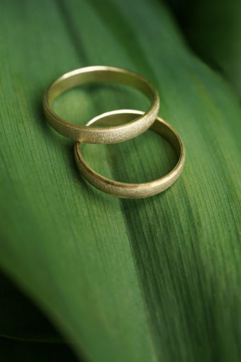 Close-up of wedding rings on leaf
