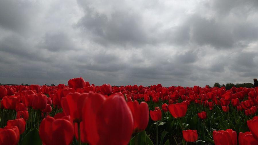 God's Garden of Love💓 Flower Head Flower Tree Water Poppy Topography Flowerbed Multi Colored Patchwork Landscape Mountain