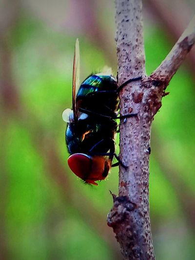 Animal Wildlife Animals In The Wild Animal Themes Insect Animal Close-up Focus On Foreground One Animal Tree No People Day Beauty In Nature Selective Focus Outdoors Branch Beetle