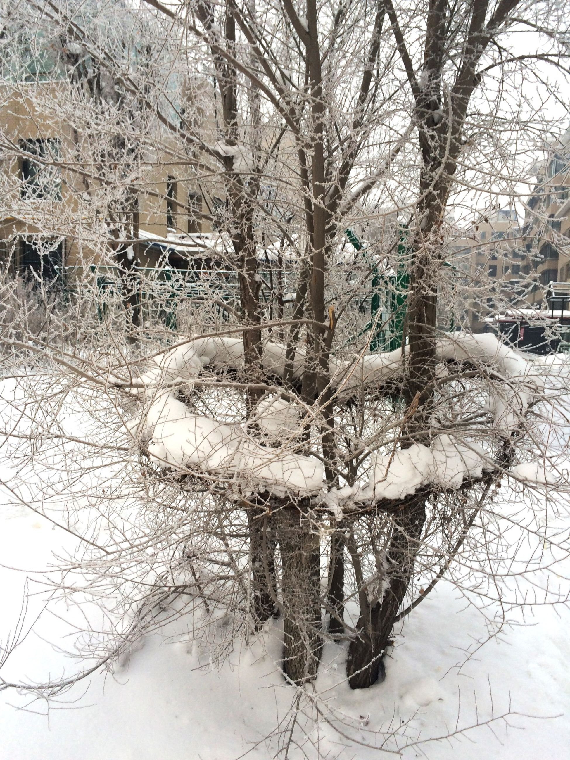 winter, snow, cold temperature, tree, bare tree, season, branch, building exterior, architecture, weather, built structure, nature, frozen, tranquility, covering, tranquil scene, beauty in nature, tree trunk, day, reflection