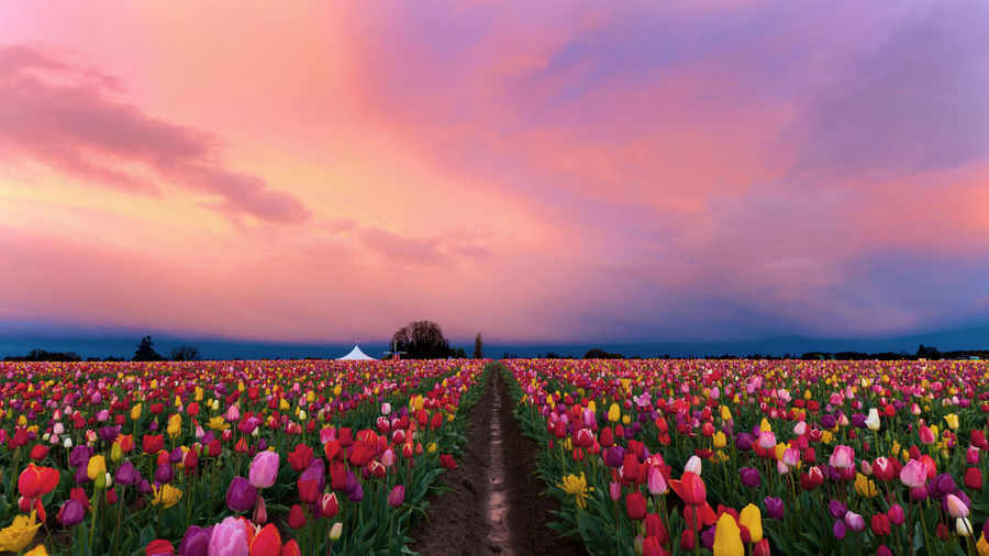 to see in the morning garden of flowers will refresh lives Agriculture