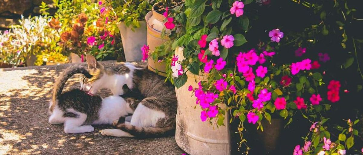 RePicture Motherhood Azores Kitty Mom Cat Santa Maria