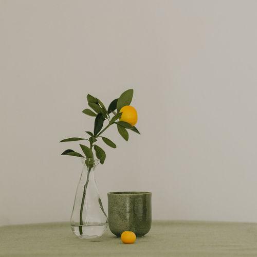 Plant growing in vase against wall