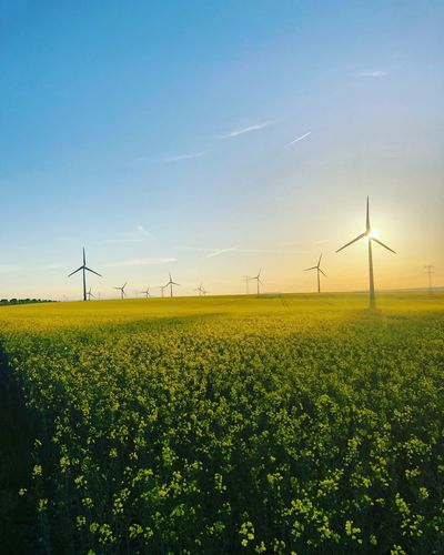 Sundance Romance ☀️💋 | Oliver Hlavaty Photographie • © 2015-18 Yellow Flower Yellow Raps Rapsfeld Waltersleben Oliverhlavatyphotographie Oliverhlavaty Thuringen Thuringia Erfurt Environment Sky Field Renewable Energy Fuel And Power Generation Turbine Environmental Conservation Wind Turbine Landscape Land Alternative Energy Beauty In Nature Agriculture Wind Power Technology Nature Plant Tranquil Scene Rural Scene Growth