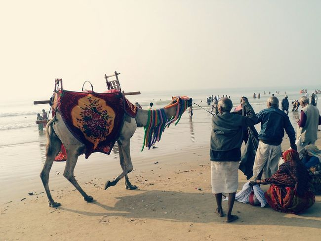 The Puri Beach,INDIA Miles Away Nature Sky Domestic Animals Animal Themes People Camel Vibrant Beach Photography Beach Sand On The Move Sea Sea Shore Bestoftheday Animal Love ♥ EyeEm Best Shots Miles Away The City Light